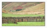 Sheep pens in the Borders