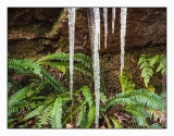 Fern icicles on trail on north side of Loch Carron